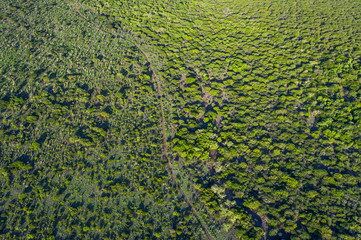 Aerial view of Zululand bushveld and trees