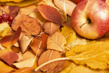 autumn background, red apple on yellow fallen leaves, abstract decoration in country style, dark brown toned