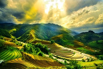 Garden Poster Rice fields Rice fields on terraced of Mu Cang Chai, YenBai, Vietnam. Vietnam landscapes.