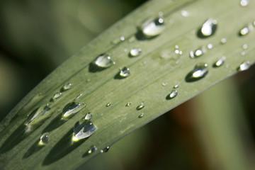 Leaf with rain drop