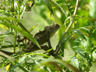 Green lizard on the green bush