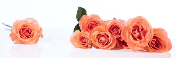 orangene oder lachsfarbene rosen vor weiß