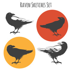 Wall Mural - Vector raven or black crow bird ink drawing sketch with sketchy wings feathers.