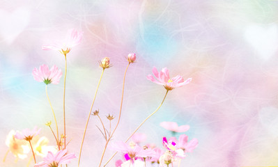 Soft and blurred Cosmos flower on mulberry paper background