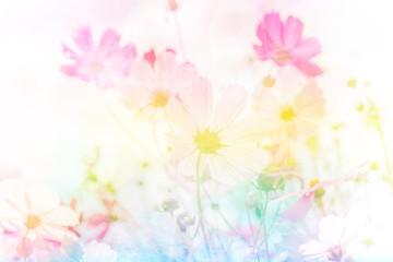Fototapete - Soft and blurred cosmos flower on pastel filter style concept