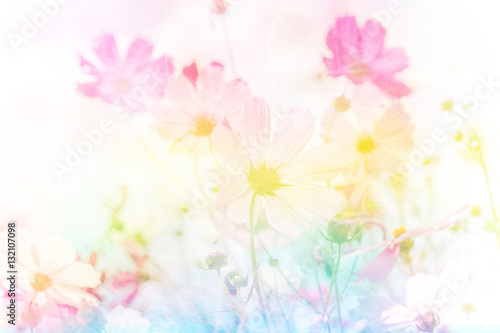 Wall mural Soft and blurred cosmos flower on pastel filter style concept