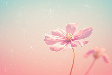 Fototapete - Cosmos flower on vintage tone concept style with bokeh and star