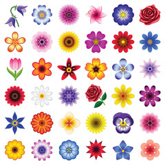 Flower icon collection - color illustration