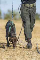 German Short-Haired Pointer Anti-Poaching Tracker Dog