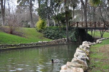 Parco del Retiro - Madrid