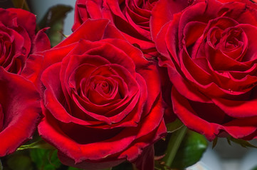 Closeup of beautiful red roses. Flower background.
