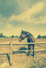 Horse on ranch, countryside landscape