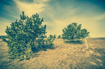 Printed roller blinds Khaki Pine trees on field, landscape