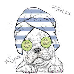 Cute Bulldog in a towel with cucumbers on her eyes. Spa treatment. Vector illustration.