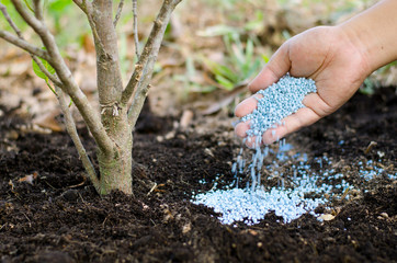 Farmer hand giving chemical fertilizer to young tree