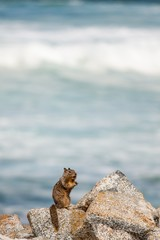 Squirrel outpost on rocky shore