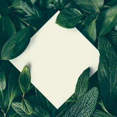 Creative layout made of green leaves with paper card note. Flat