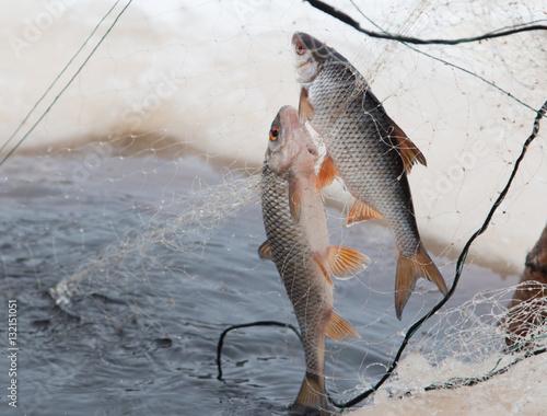 куса рыбалка