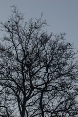 Birds on highest branches