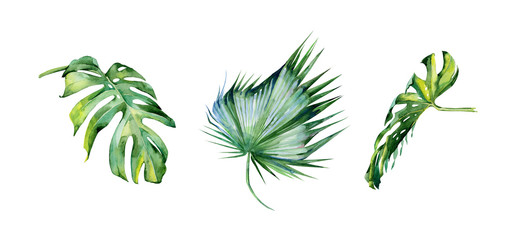 Watercolor illustration of tropical leaves, dense jungle. Hand painted. Banner with tropic summertime motif may be used as background texture, wrapping paper, textile or wallpaper interior design