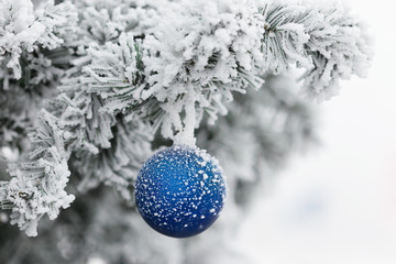 Wall Mural - Blue ball on branch of a Christmas tree in frost and snow