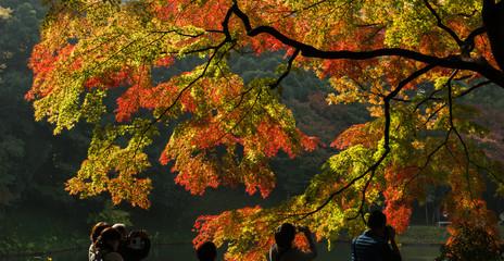 Foliage in Japan