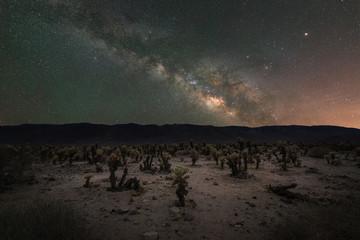 Cholla Cactus Milky Way