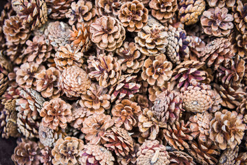 Background of dry tan pinecones with purple coloring