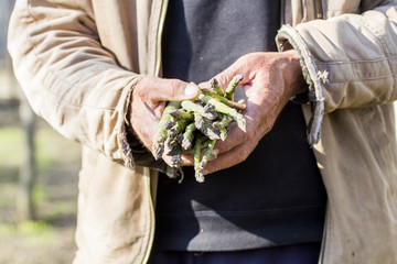 Man hands holding a bunch of fresh asparagus stems