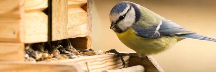 Blaumeise am Vogelhaus
