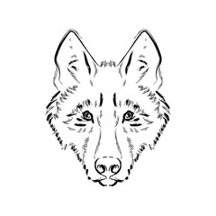 Grungy black and white wolf