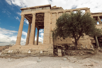 Erechtheion with olive tree in Acropolis, Athens, Greece