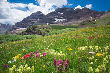 Aspen Wilderness Flowers