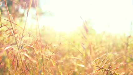 Fotoväggar - Summer field meadow flowers. Beautiful nature scene with blooming flowers in sun flare. Slow motion. Full HD 1080p