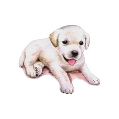 Watercolor closeup portrait of Labrador Retriever puppy isolated on white background. Lab breed dog showing tongue. Large longhair gun dog from Scotland. Hand drawn sweet home pet greeting card design