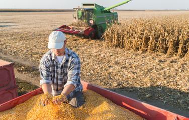Young farmer holding ripe corns