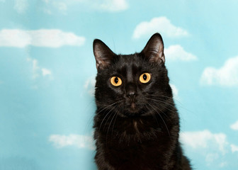 Portrait of a petite black cat with yellow eyes looking at viewer, blue background sky with clouds. copy space