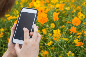 A women take photo by smartphone with flower in flower garden.