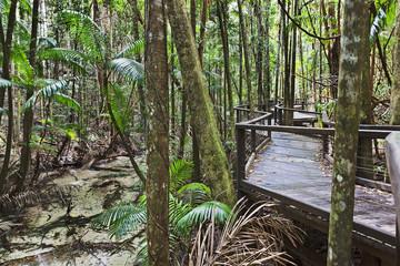 QE FI Rainforest boardwalk