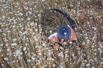 camera lay down in meadow