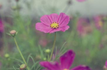Vivid violet flowers (Vintage Style)