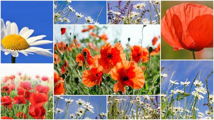 Frühlingserwachen: Meditation, Relaxen in Blumenwiese mit leuchtend schönen Margeriten und rotem Klatschmohn:)