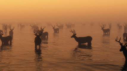 Group of red deer standing in water in morning mist.