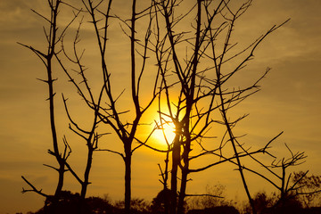 Branches in front of sunset sky