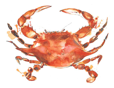Crab watercolor painting illustration isolated on white background