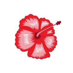 tropical red hibiscus symbol Hawaii summer icon vector