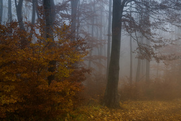 Mist in the woods during autumn. Slovakia