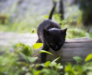 Baby cat exploring