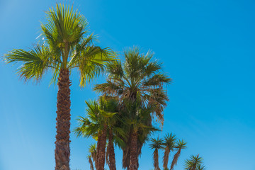 Amazing palm trees in the blue sunny sky. Tropical background