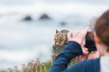 Tourist taking a photo of curious squirrel - Stock image
